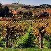 california dreaming, wines & (wet) dreams